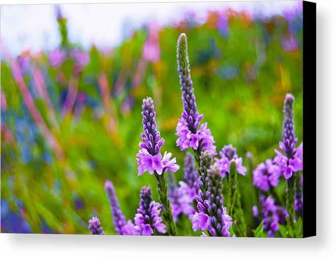 The Garden Palette Canvas Print featuring the photograph The Garden Palette by Christi Kraft