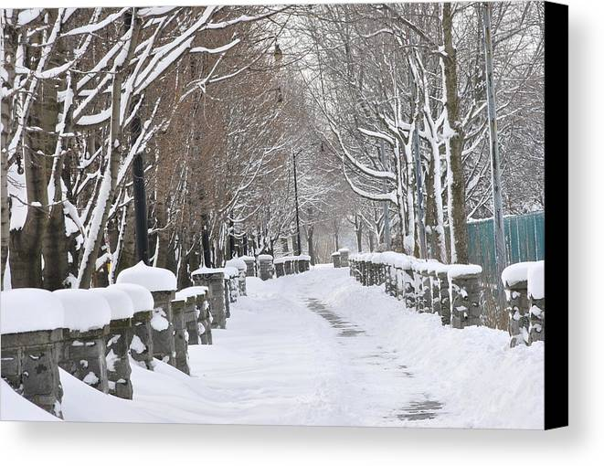 Winter Canvas Print featuring the photograph Winter by Frederico Borges