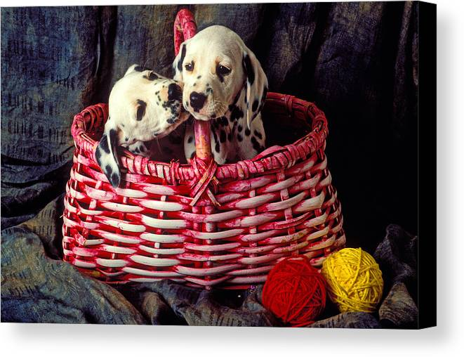 Two Dalmatian Canvas Print featuring the photograph Two Dalmatian Puppies by Garry Gay