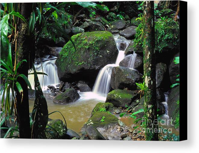 Puerto Rico Canvas Print featuring the photograph El Yunque National Forest Waterfall by Thomas R Fletcher