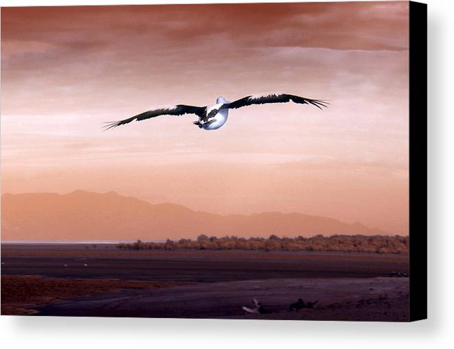 Animals. Birds Canvas Print featuring the photograph Flight by Holly Kempe