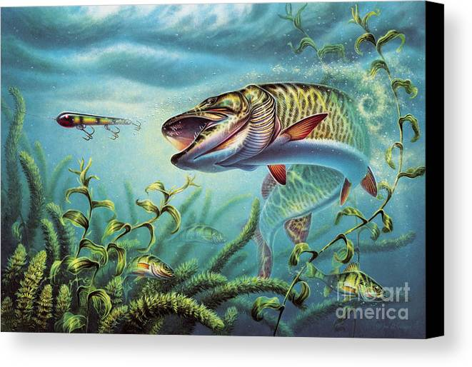 Muskie Canvas Print featuring the painting Provoked Musky by Jon Q Wright