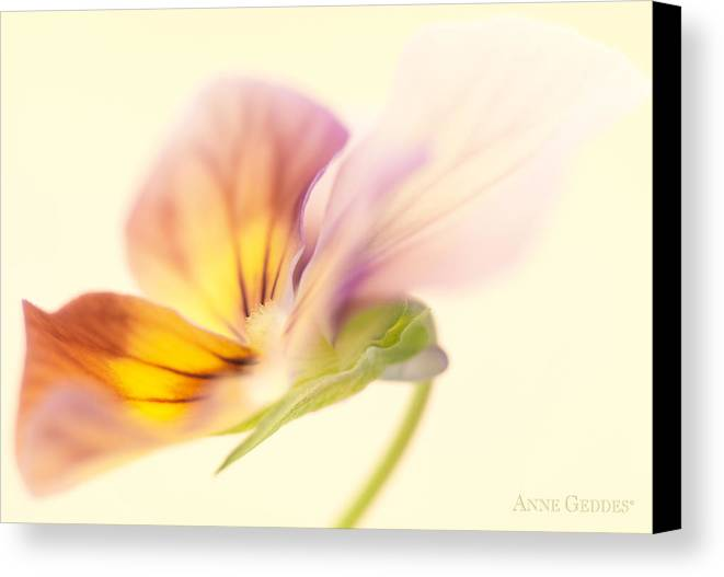 Flower Canvas Print featuring the photograph Untitled by Anne Geddes
