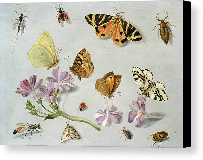 Still Life Canvas Print featuring the painting Butterflies by Jan Van Kessel