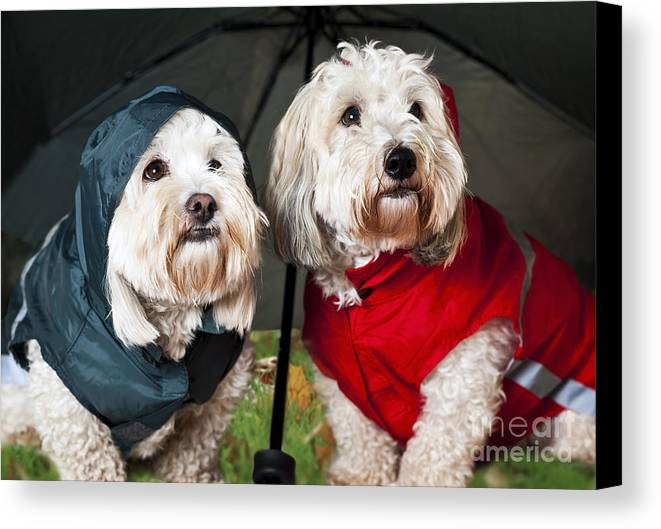 Dogs Canvas Print featuring the photograph Dogs Under Umbrella by Elena Elisseeva
