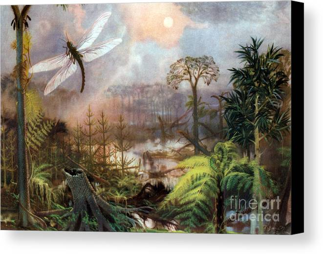 Flora Canvas Print featuring the photograph Meganeura In Upper Carboniferous by Science Source