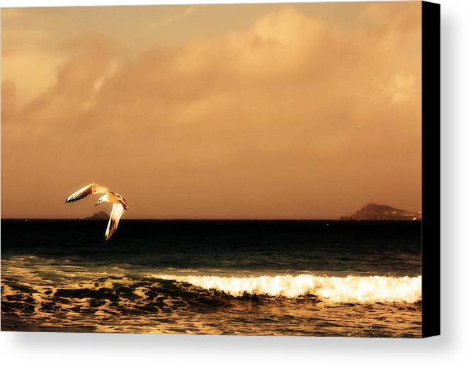 Seagull Canvas Print featuring the photograph Sennen Seagull by Linsey Williams
