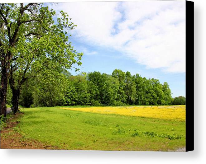 Franklin Canvas Print featuring the photograph Springtime In Franklin by Kristin Elmquist