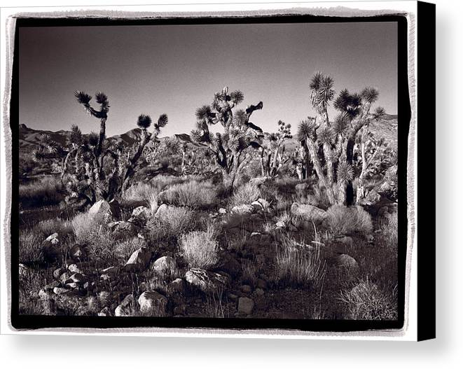 Desert Canvas Print featuring the photograph Joshua Tree Forest St George Utah by Steve Gadomski