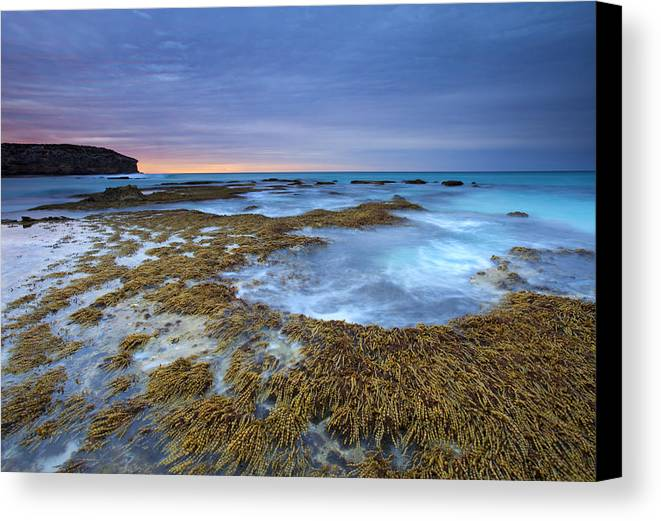 Pennington Bay Canvas Print featuring the photograph Sunrise Beneath The Storm by Mike Dawson