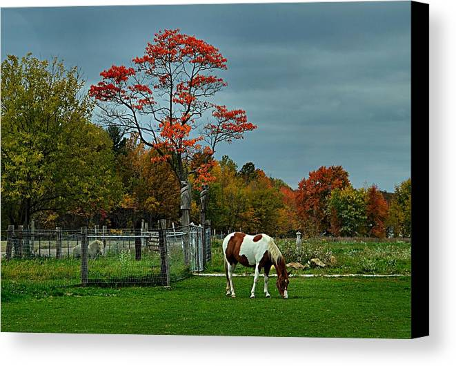 Fall Scenes Canvas Print featuring the photograph The Pinto by Julie Dant