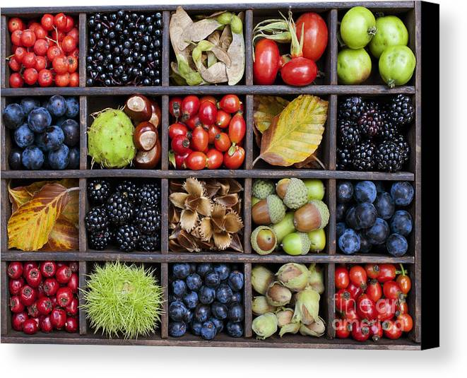 Autumn Canvas Print featuring the photograph Autumnal Harvest by Tim Gainey