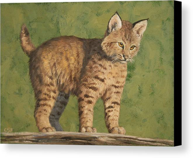 Cat Canvas Print featuring the painting Bobcat Kitten by Crista Forest