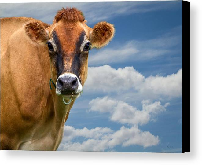 Cow Canvas Print featuring the photograph Dairy Cow Bessy by Bob Orsillo