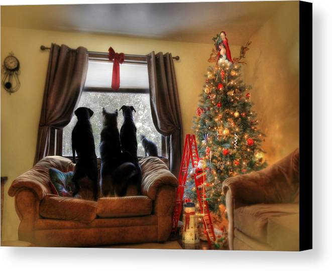 Dog Canvas Print featuring the photograph Do You Hear What I Hear by Lori Deiter
