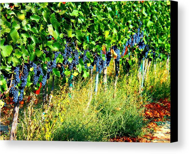 Grapes Canvas Print featuring the photograph Fruit Of The Vine by Kay Gilley