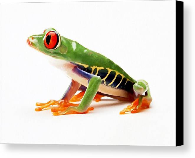 Amphibian Canvas Print featuring the painting Red-eye Tree Frog 4 by Lanjee Chee