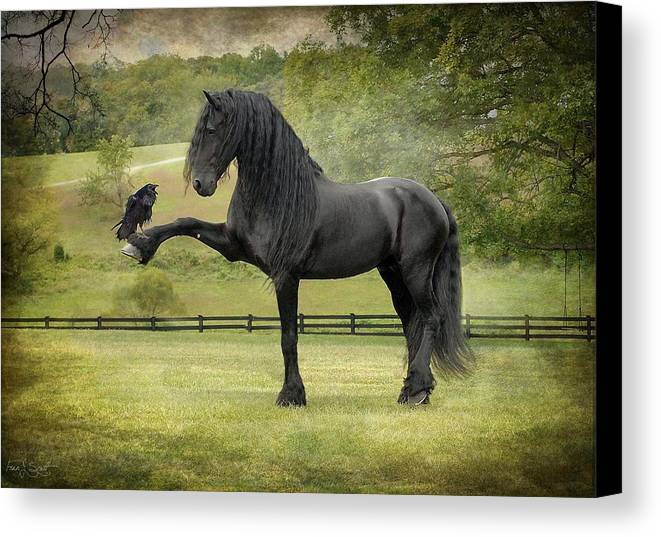 Friesian Horses Canvas Print featuring the photograph The Harbinger by Fran J Scott