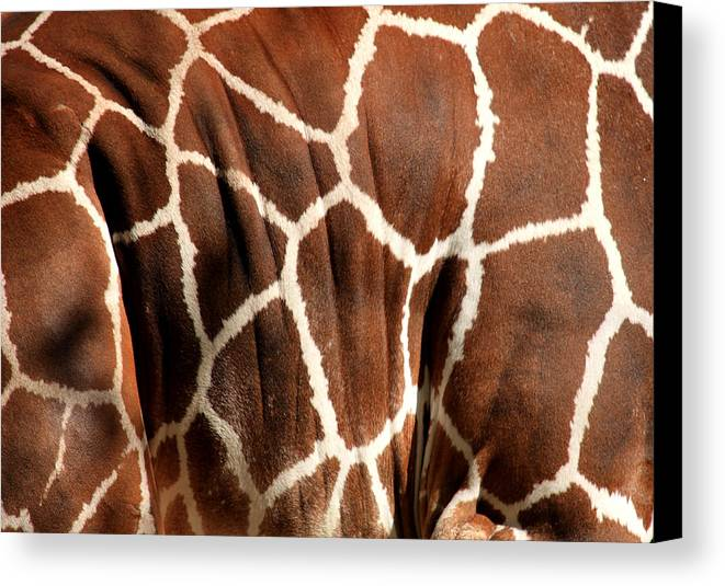 Giraffe Canvas Print featuring the photograph Wildlife Patterns by Aidan Moran