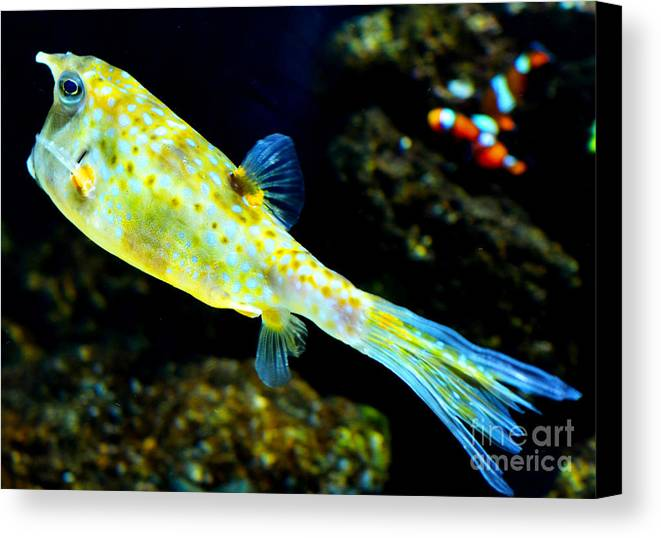 Fish Canvas Print featuring the photograph Exotic Fish by Pravine Chester