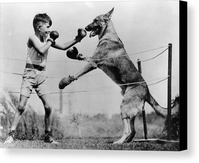 8-9 Years Canvas Print featuring the photograph Boxing With Dog by Topical Press Agency