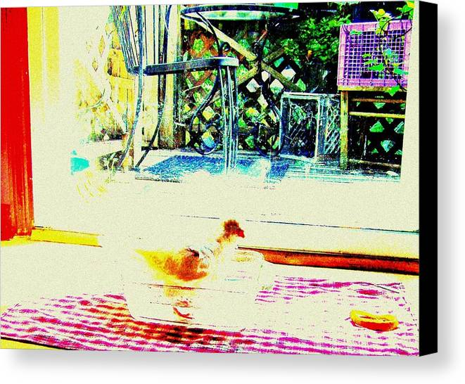 Pigeon Canvas Print featuring the mixed media Bird Bath by YoMamaBird Rhonda