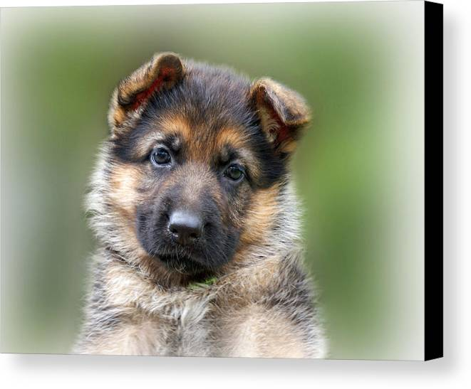 Puppies Canvas Print featuring the photograph Puppy Portrait by Sandy Keeton