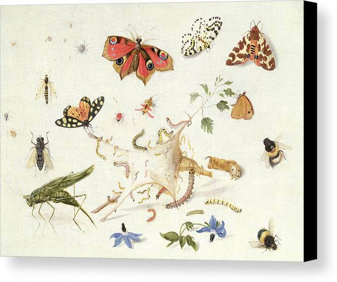 Insect Canvas Print featuring the painting Study Of Insects And Flowers by Ferdinand van Kessel