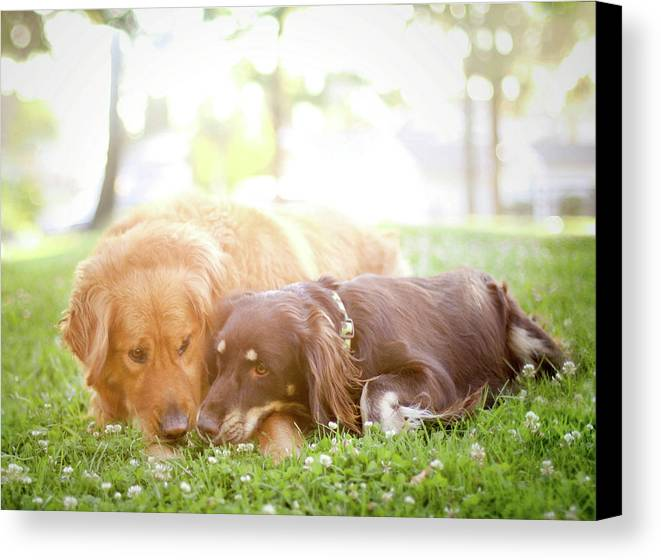 Horizontal Canvas Print featuring the photograph Dogs Snuggling Outside Being Cute by Jessica Trinh