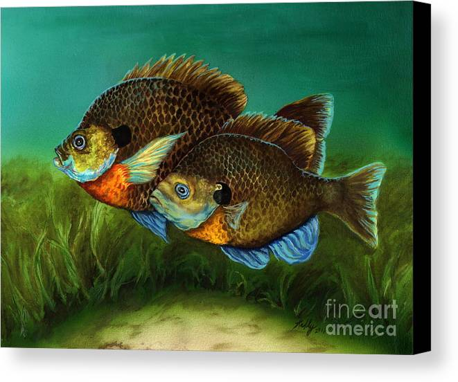 Bluegills Canvas Print featuring the painting Pretty Little Panfish by Kathleen Kelly Thompson
