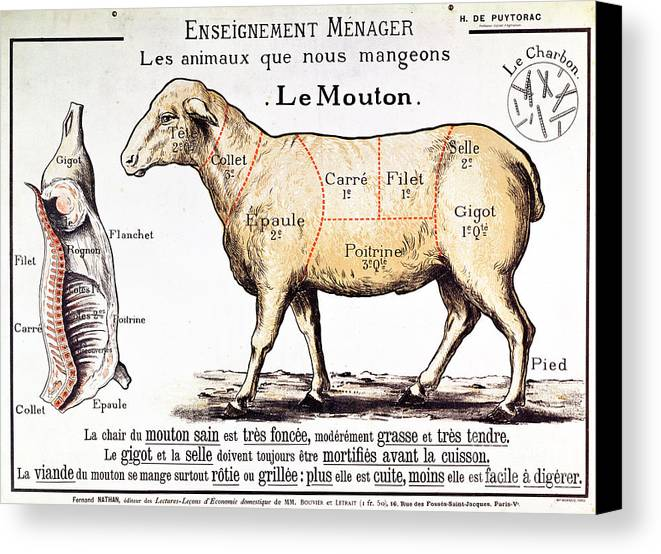 Le Mouton; Lamb; Sheep; Joint; Cut; Meat; Food; Animal; Mutton; Butchering Canvas Print featuring the drawing Mutton by French School