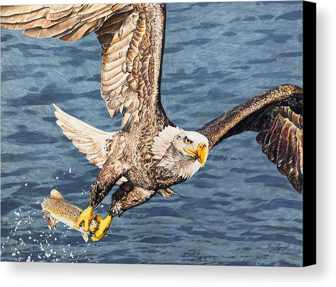 Eagle Canvas Print featuring the drawing Bald Eagle Fishing by Aaron Spong