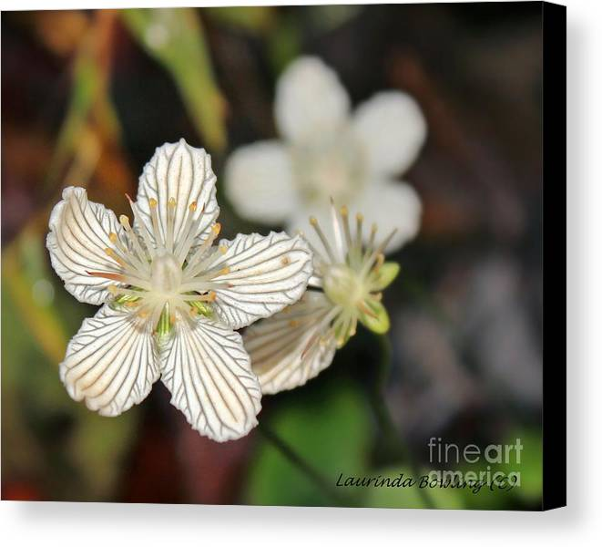 Flower Canvas Print featuring the photograph Little Wildflower by Laurinda Bowling