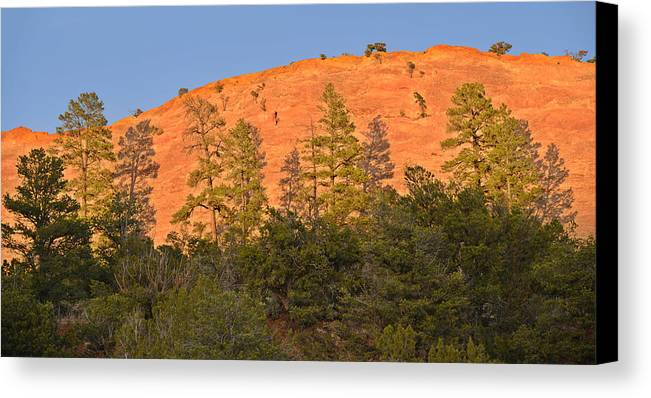 Tree Canvas Print featuring the photograph Every Tree In Its Shadow by Christine Till