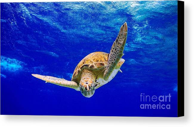 Diving Canvas Print featuring the photograph Into The Blue by Isabelle Kuehn