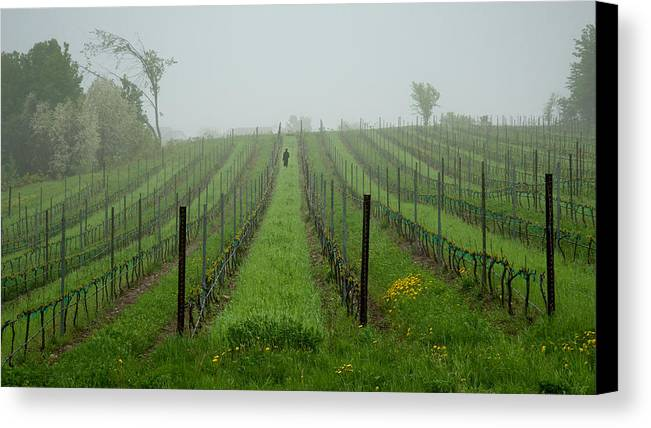 Vine Canvas Print featuring the photograph Lone Figure In Vineyard In The Rain On The Mission Peninsula Michigan by Mary Lee Dereske