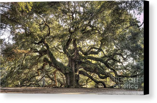 Angel Oak Tree Canvas Print featuring the photograph Angel Oak Tree Live Oak by Dustin K Ryan