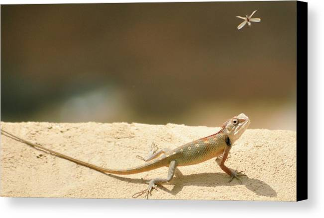 Horizontal Canvas Print featuring the photograph Lizards by Shahzeb Nasir