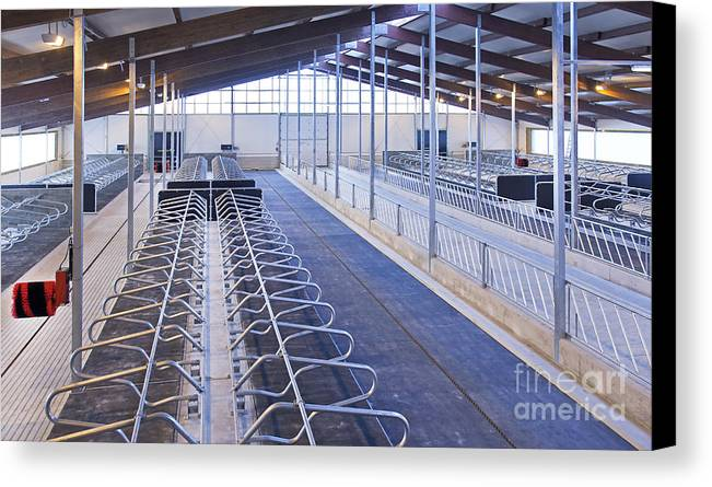 Agricultural Canvas Print featuring the photograph Row Of Cattle Cubicles by Jaak Nilson