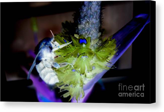 Bee Canvas Print featuring the digital art Don't Bee Blue by Renee Trenholm
