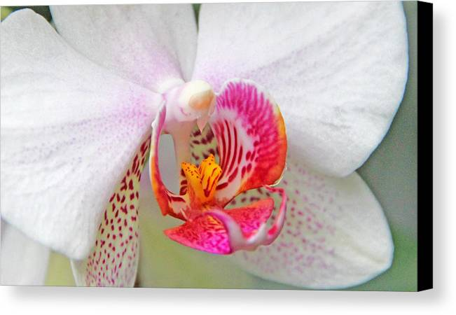 Becky Canvas Print featuring the photograph Orchids 10 by Becky Lodes