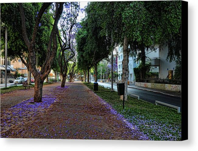 Foliage Canvas Print featuring the photograph Rothschild Boulevard by Ron Shoshani