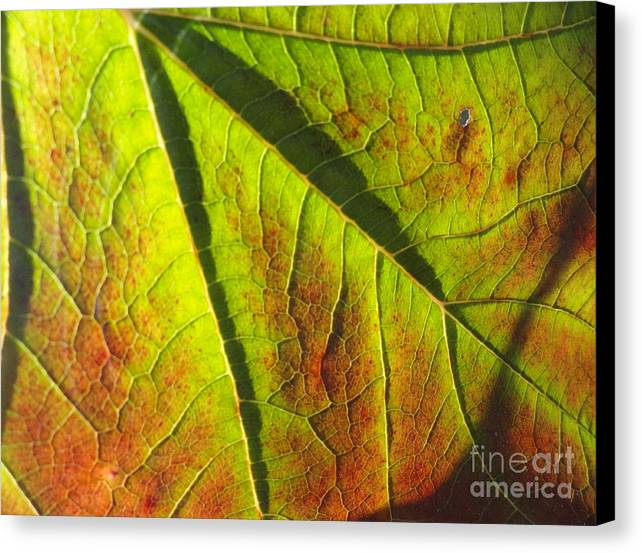 Leaves Canvas Print featuring the photograph Green Days Past by Trish Hale
