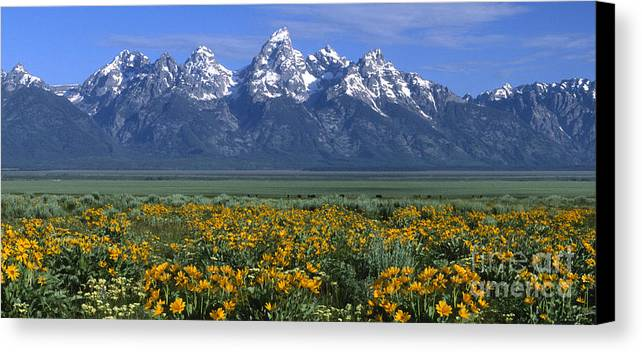 Grand Teton Canvas Print featuring the photograph Grand Teton Summer by Sandra Bronstein