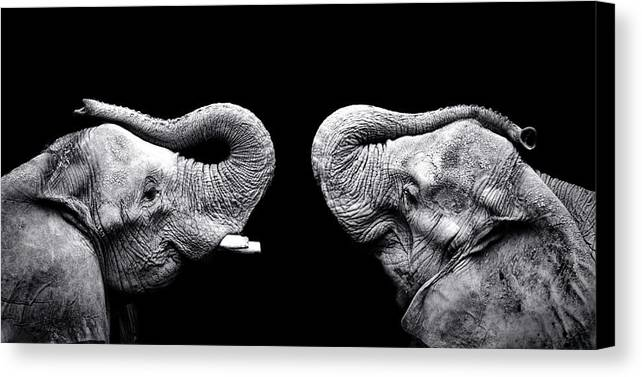 Horizontal Canvas Print featuring the photograph Two Elephants Face To Face by Malcolm MacGregor