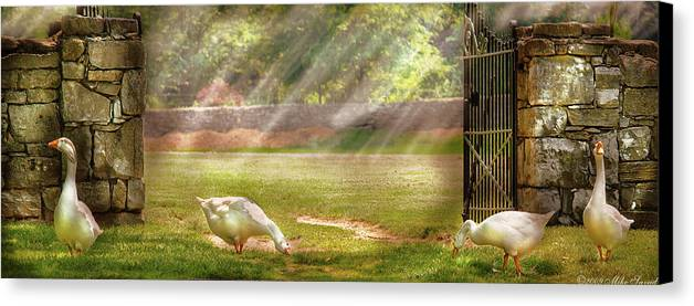 Savad Canvas Print featuring the photograph Farm - Geese - Birds Of A Feather - Panorama by Mike Savad