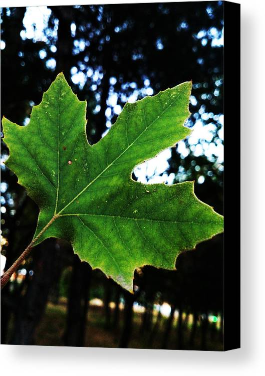 Leaf Canvas Print featuring the photograph Every Story Has A Beginning... by Lucy D
