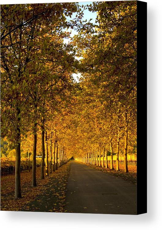 Napa Valley Canvas Print featuring the photograph Napa Valley Fall by Bill Gallagher