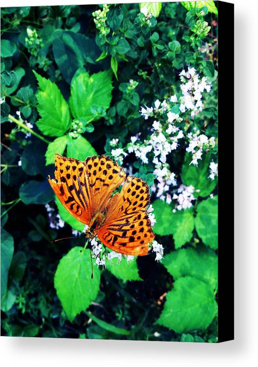 Butterfly Canvas Print featuring the photograph The Forest Guardian 2 by Lucy D