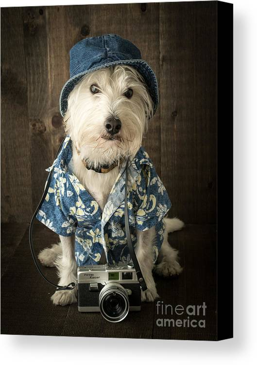 Dog Canvas Print featuring the photograph Vacation Dog by Edward Fielding